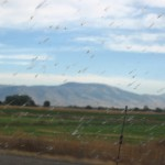The bug splatters became pretty intense on my way out of Idaho.